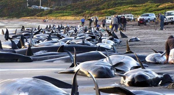 紐西蘭鯨魚