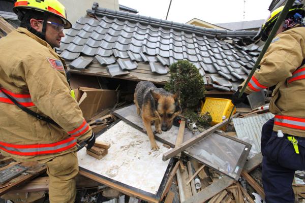 日本震災餘生的狗狗