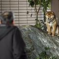 日本震災餘生的狗狗09.jpg