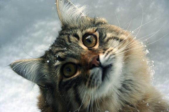 貓咪玩雪03.jpg