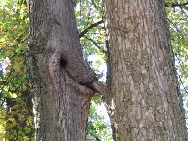 Oral_sex_tree_by_Nakeshka.jpg