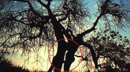 sex_tree.jpg