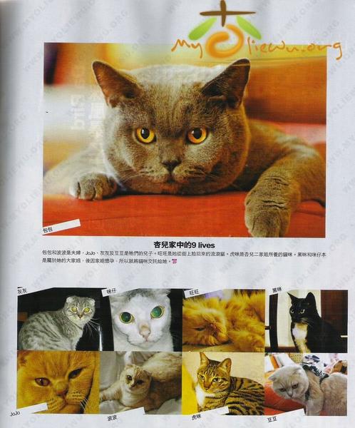 胡杏兒的貓.jpg