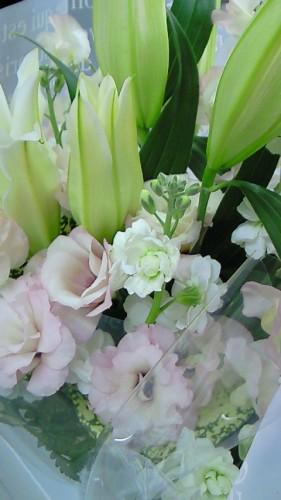 平野綾住院收到的花