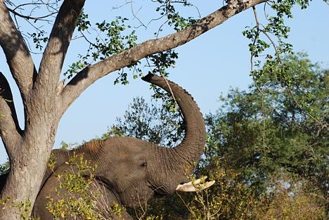 誰說大象不會跳舞