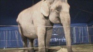 大象的眼淚