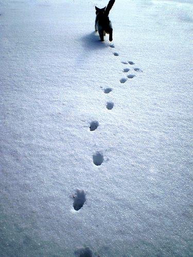 貓咪玩雪13.jpg