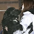 日本震災餘生的狗狗02.jpg