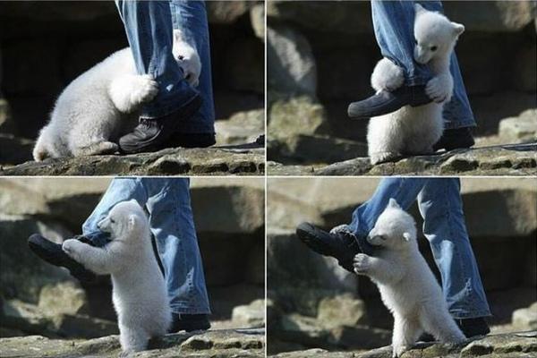 北極熊的擁抱