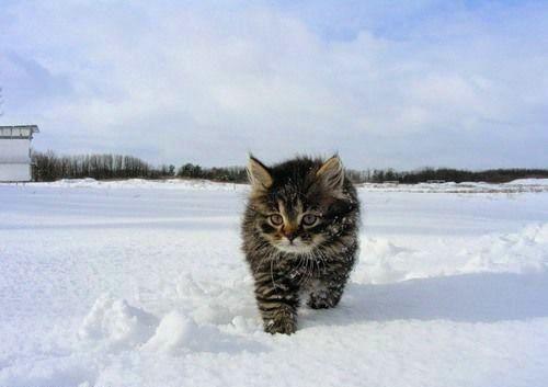 貓咪玩雪19.jpg