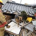 日本震災餘生的狗狗18.jpg
