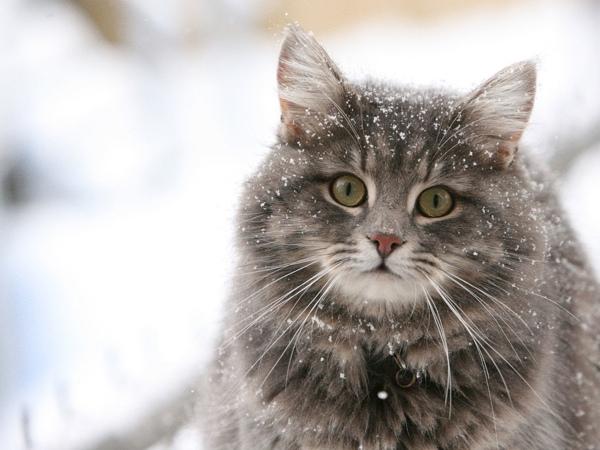 貓咪玩雪01.jpg