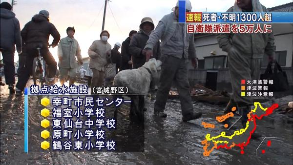 日本震災餘生的狗狗22.jpg