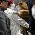 日本震災餘生的狗狗23.jpg