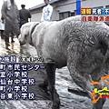 日本震災餘生的狗狗26.jpg