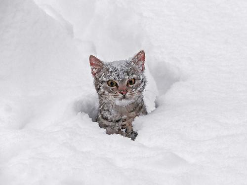 貓咪玩雪05.jpg