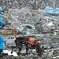 日本震災餘生的狗狗05.jpg