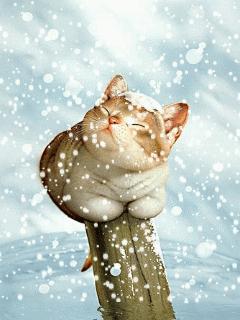 貓咪玩雪17.jpg