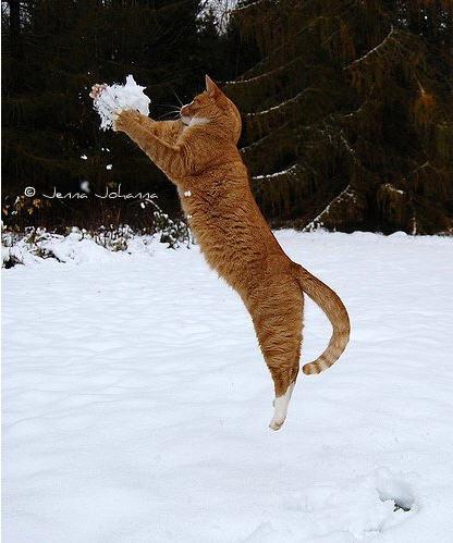 貓咪玩雪18.jpg