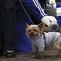 日本震災餘生的狗狗14.jpg