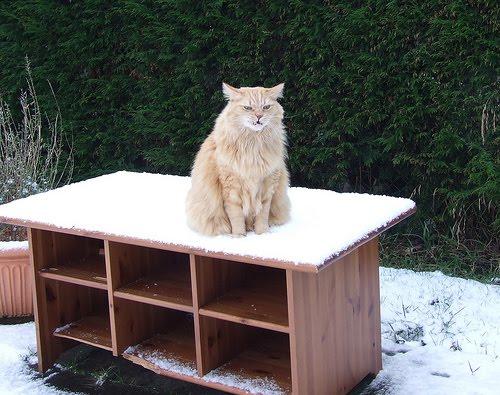 貓咪玩雪12.jpg