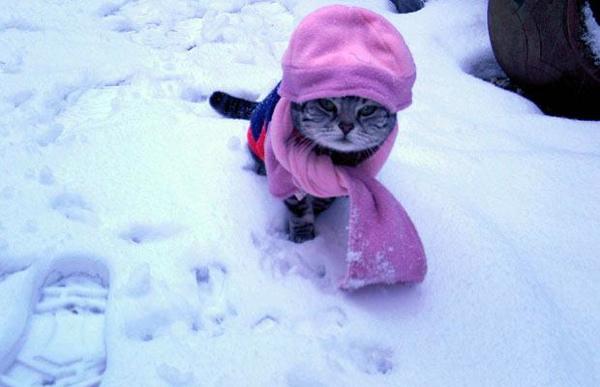 貓咪玩雪20.jpg