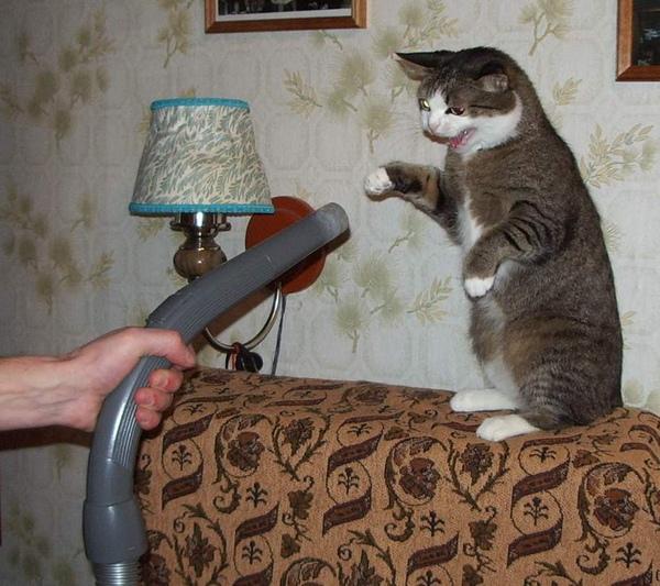 貓咪與吸塵器