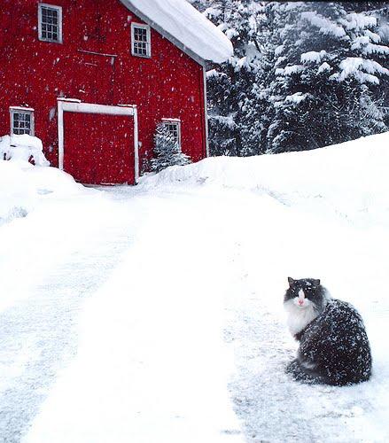 貓咪玩雪10.jpg