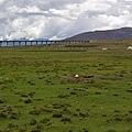 青藏公路-16.jpg