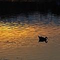 sunset-shadow-2