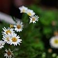 花園隨拍-1.jpg