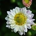 花園隨拍-2.jpg