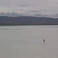 茶卡鹽湖-26.jpg