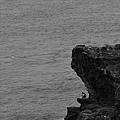 釣魚-02.jpg