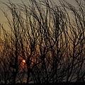 樹枝孤烏-01.jpg