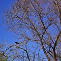 樹枝孤烏-02.jpg