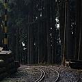阿里山-27.jpg