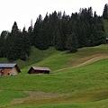 Grindelwald-31