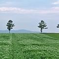メルヘンの丘-02
