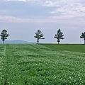 メルヘンの丘-03