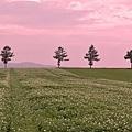 メルヘンの丘-04