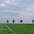 メルヘンの丘-05