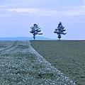 メルヘンの丘-12