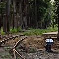 烏樹林-29.jpg
