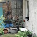 一樓鄰居養的貓