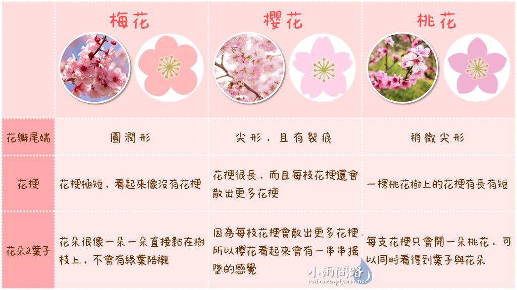 賞花知識懶人包 梅花、櫻花、桃花怎麼分辨? (2).PNG