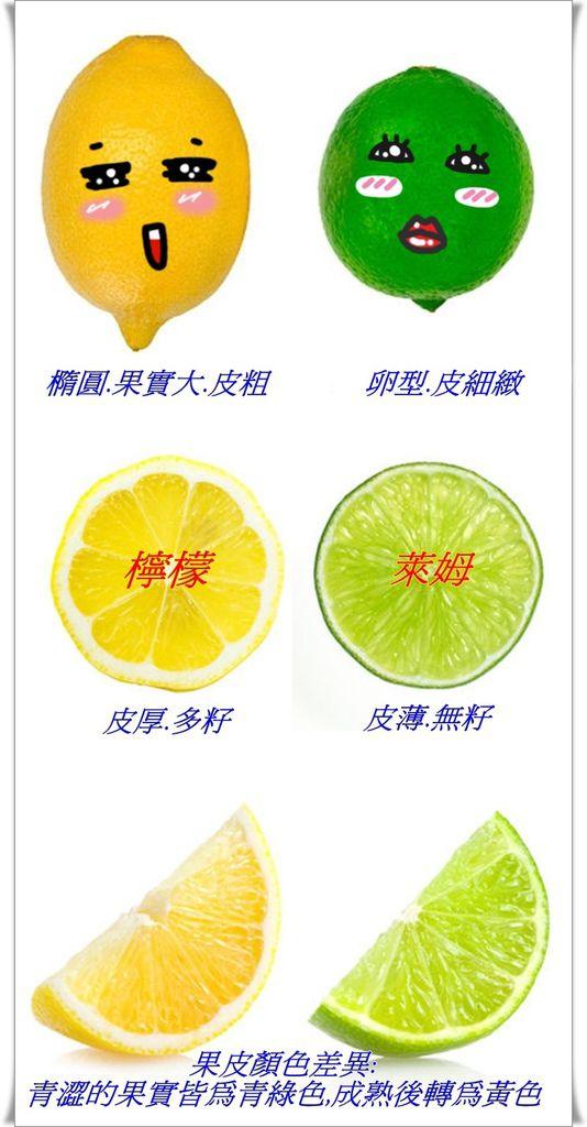 2-vert