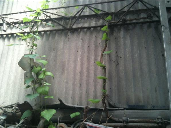 植物生長.JPG