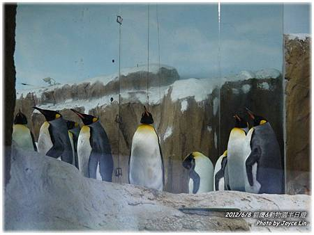 004-企鵝