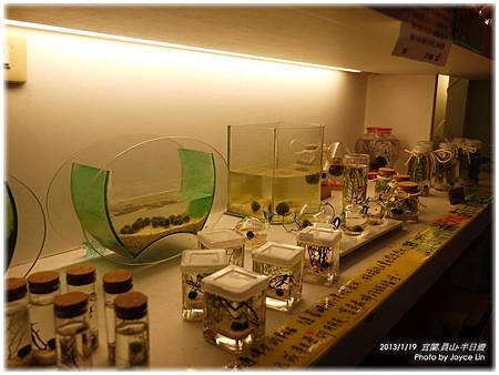 016-各式生態瓶